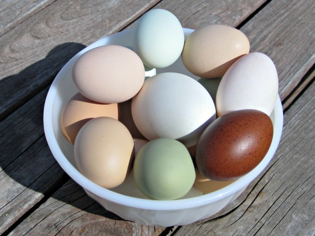 largest egg is from a goose, smaller white egg from a duck, blue is from an Ameraucana hen, green from an easter egg hen, light browns are from Silver-laced Wyandotte and Buff Orpington hens, dark brown is from a Black Copper Marans hen.