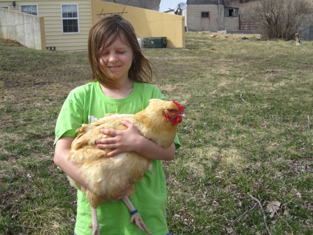 The Taterbug and the one large fowl chicken that moved with us.  Somehow we missed her when giving all the big chickens to a friend.